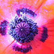 Pure Poppy Art Print