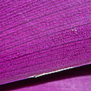 Pure Purple Art Print