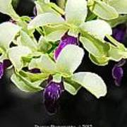 Purple And White Orchid Accent Fx  Art Print