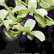 Purple And White Orchid Fx  Art Print