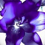 Purple Blast Art Print
