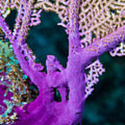 Purple Coral Art Print