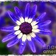 Purple Daisy Photoart Art Print
