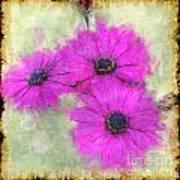 Purple Daisy Trio II Art Print