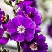 Purple Delight Art Print