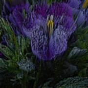 Purple Flower Springs Art Print
