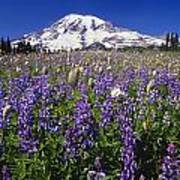 Purple Flowers Blooming Beneath Mount Art Print