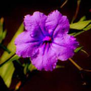 Purple Is The Color Art Print