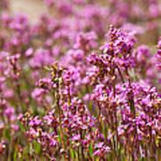 Purple Meadow Art Print