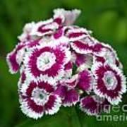 Purple On White Flowers Art Print