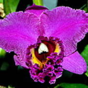 Purple Orchid 006 Art Print
