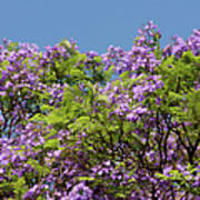 Purple Prelude Art Print