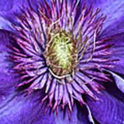 Purple Star Art Print