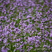 Purple Wildflowers Square Art Print