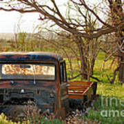 Put Out To Pasture2 Art Print
