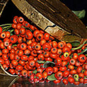 Pyracantha Berries Art Print