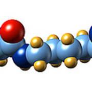 Pyrrolysine, Molecular Model Art Print