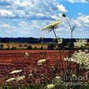 Queen Annes Lace And Hay Bales Art Print