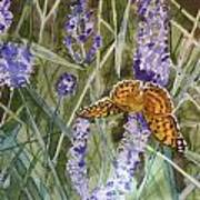 Queen Of Spain Fritillary And Lavender II Art Print