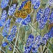 Queen Of Spain Fritillary And Lavender Art Print