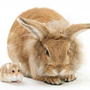 Rabbit And Dwarf Hamster Art Print