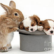 Rabbit And Spaniel Pups Art Print