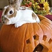 Rabbit Joins The Harvest Art Print by Alanna DPhoto