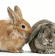 Rabbits Art Print