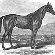 Racehorse, 1867 Art Print
