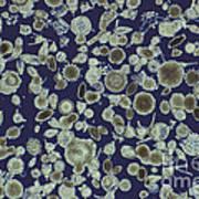 Radiolarian Ooze Lm Art Print