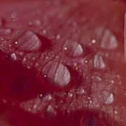 Rain Droplets Magnify The Surface Art Print