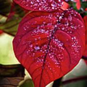 Rain Drops On Red Leaves Art Print