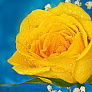 Rain On A Yellow Rose Art Print