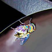Rainbow Fly Art Print