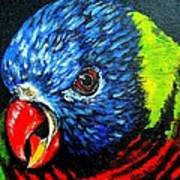 Rainbow Lorikeet Look Art Print