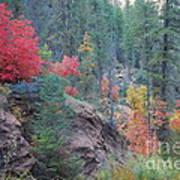 Rainbow Of The Season Art Print by Heather Kirk