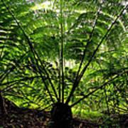 Rainforest Backlight Art Print