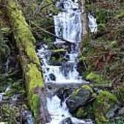 Rainforest Waterfall Art Print