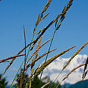 Rainier Weeds Art Print
