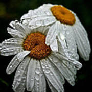 Rainy Day Daisies Art Print