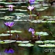 Rainy Day Lotus Flower Reflections Iv Art Print