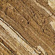 Rajasthan Sandstone Marble Streaks Art Print