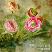 Ranunculus Painterly Art Print