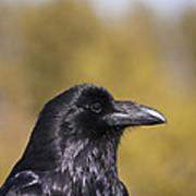 Raven Art Print
