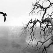 Raven In Grand Canyon Art Print