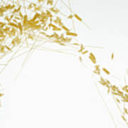 Raw Pasta Against A White Background Art Print