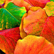 Really Colorful Fall Leaves Art Print