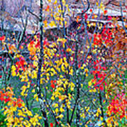 Red And Gold In Quarry At Elephant Rocks State Park Art Print