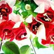 Red And White Fuschias Art Print