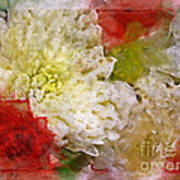 Red And White Mums Photoart Art Print